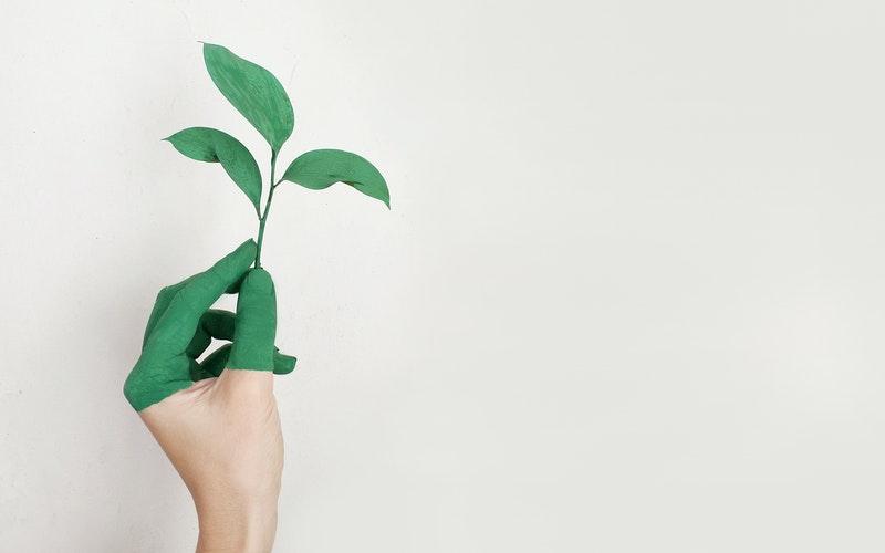 Peinture-écologique-que-faut-il-savoir